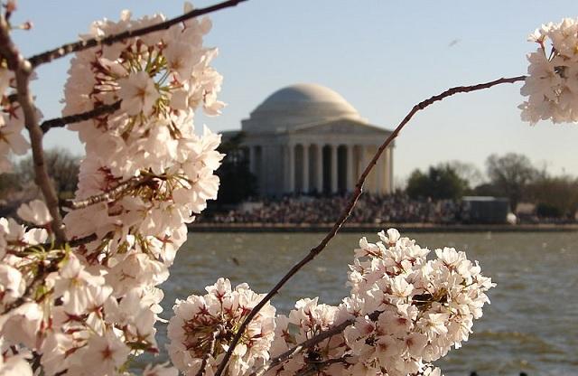 National Cherry Blossom Festival - Jefferson Memorial