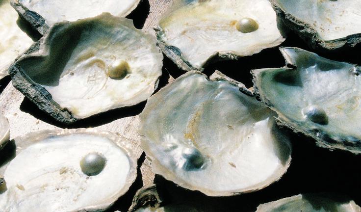 pearl-hunting-dubai